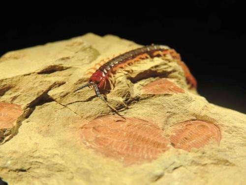 Biologists measure evolution's Big Bang