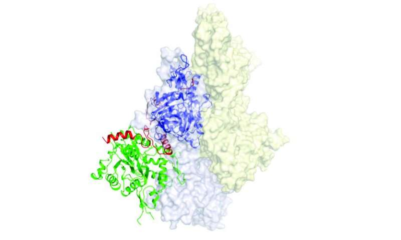 Biologists take snapshot of fleeting protein process
