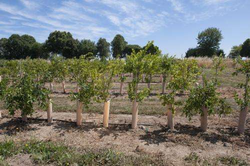 Blueberry tree research could help growers branch out