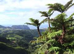 Botanists gear up for second phase of Red List project