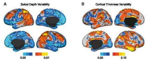 Brain research provides clues to what makes people think and behave differently