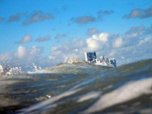 Buildings are seen near the ocean as on March 14, 2012 in North Miami, Florida