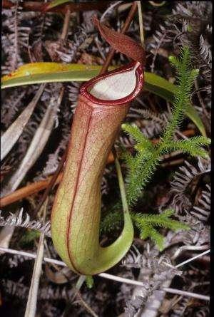 Death traps: How carnivorous plants catch their prey