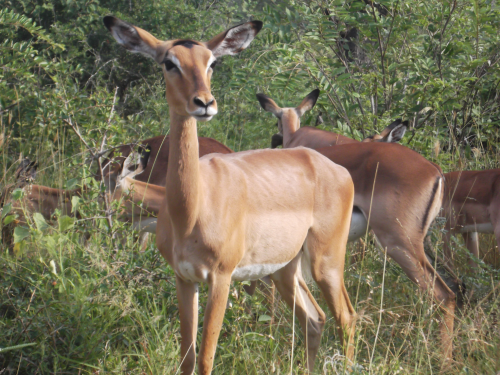 Generation length for mammals: An essential reference point for conservation studies