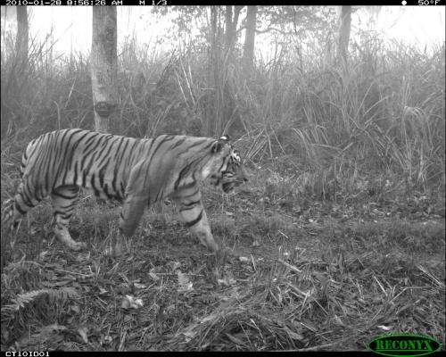 In Nepal, villagers' land uses help people and tigers, study finds