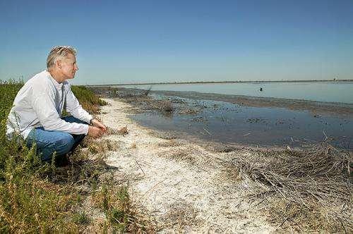 Irrigation wastewater can help salvage damaged soils