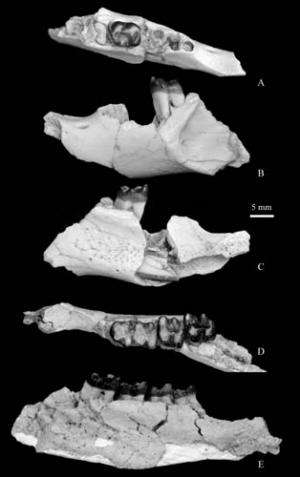Ischyromyid rodents found from the Eocene of Erlian Basin in Nei Mongol