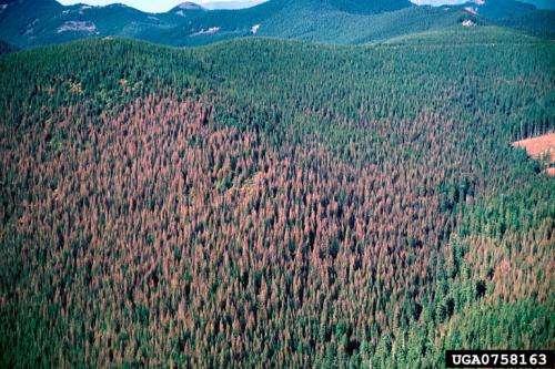 Landsat senses a disturbance in the forest