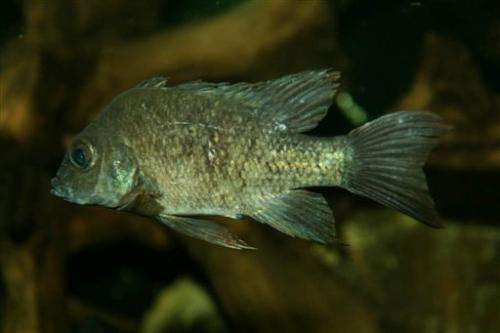 London Zoo seeks female mate for near-extinct fish