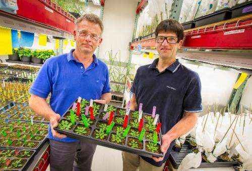 Making do with more: Joint BioEnergy Institute researchers engineer plant cell walls to boost sugar yields for biofuels