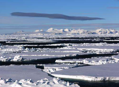 Micro-gels from tiny ice algae play an important role in polar ocean carbon budgets