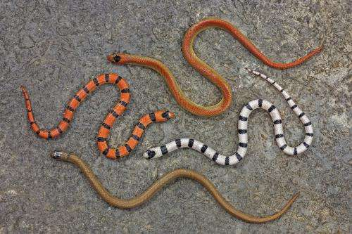 Mimicking venomous snakes: untangling the history of deceptive coloration