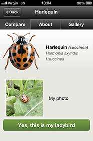 Mobile phone app to help monitor UK's native ladybirds after foreign invasion