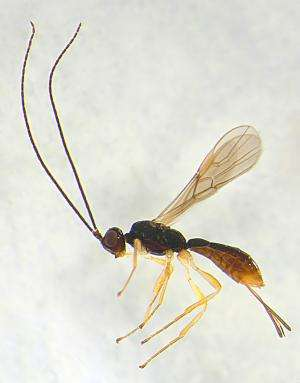 Nature's great diversity: Remarkable 277 new wasp species from Costa Rica
