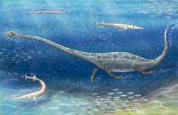 New protorosaur found from the middle triassic of southern China