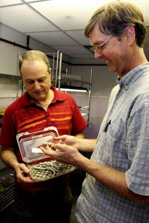 Research aims to fix long-held, inaccurate insect model