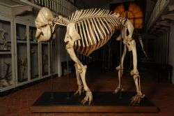 Research discovers new 'type specimen' for the Asian elephant