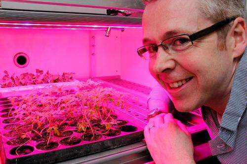 Researcher shines a light on crop growth
