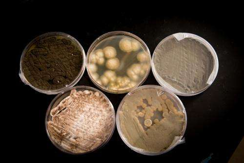 Research project studies fungi found in popular drink