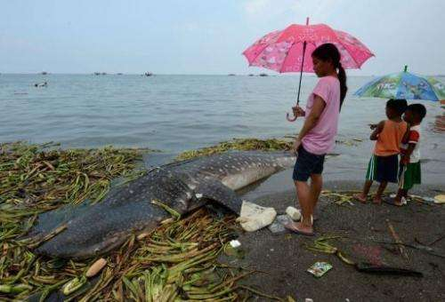 Residents look at the carcass of the 300-kg juvenile whale shark washed ashore west of Manila on September 5, 2013