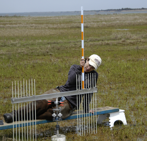 Scientist studies Hurricane Sandy's impact on N.J. coastal wetlands, one year later
