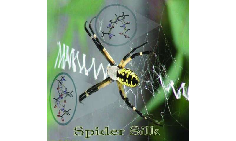 Scientists unravel mysteries of spider silk