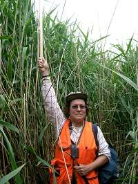 SDSU scientist documents wetland losses