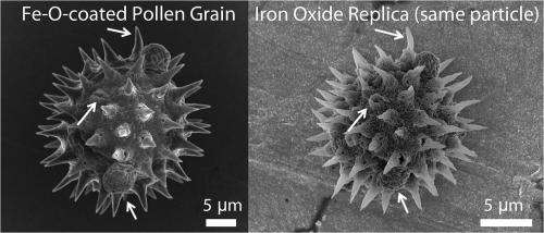 Sticky business: Magnetic pollen replicas offer multimodal adhesion