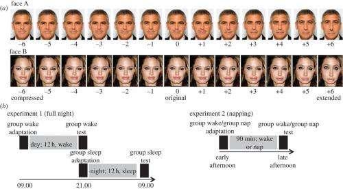 Study indicates visual adaptation enhanced by sleep and may be tied to memory