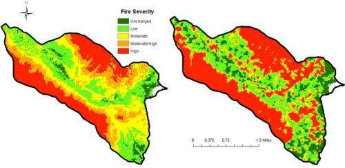 Suppression of naturally occurring blazes may increase wildfire risk