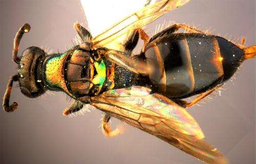 The colors of nature: 9 beautiful new wasp species from China