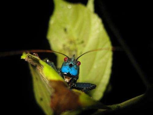 Ultrasonic sounds of the rainforest