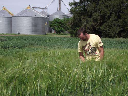 Using genes to counter rust