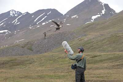 World's largest natural sound archive now online