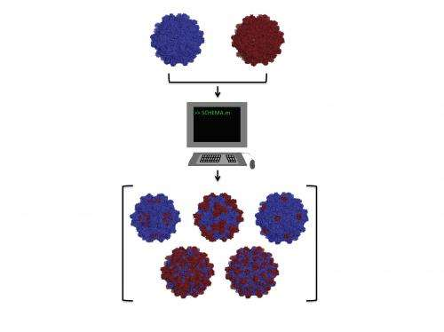 Writing rules for gene-therapy vectors: Researchers compute, then combine benign viruses to fight disease