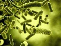 Fighting bacteria with a new genre of antibodies