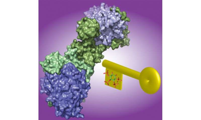 Breakthrough discovery into the regulation of a key cancer drug target
