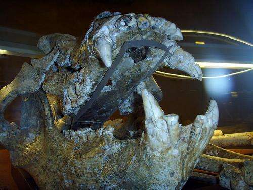 Researchers reconstruct mitochondrial genome of Middle Pleistocene cave bear