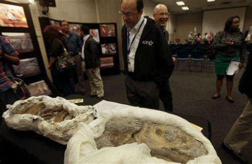 Scientists find ancient fossils in Panama
