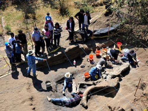 This handout photo taken on April 4, 2013 and released on April 9, 2013 shows the remains of a mammoth found in Mexico