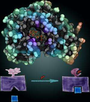 UNC researchers engineer 'protein switch' to dissect role of cancer's key players
