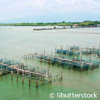 Assessing the sustainability of aquaculture production