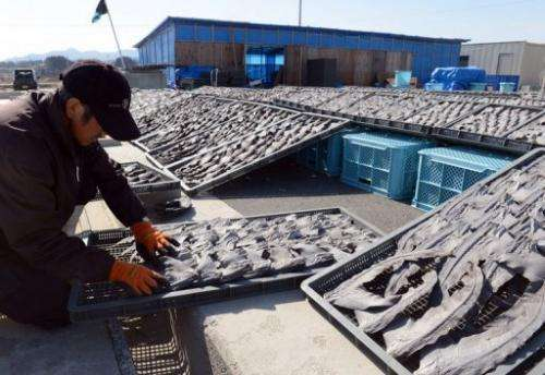 A worker turns over drying shark fins at a processing factory in Kesennuma City in northern Japan on March 12, 2013