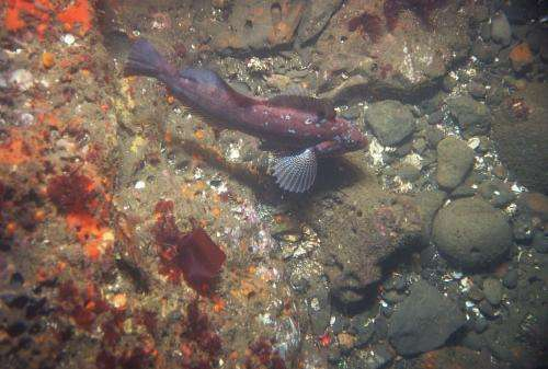 California seafloor mapping reveals hidden treasures