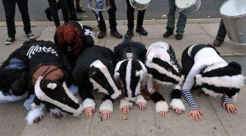 Demonstrators in badger masks take part in a 'Badger flashmob' action in London on October 21, 2012