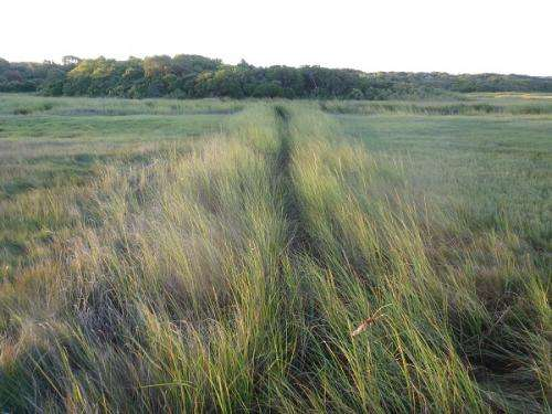 Depression-era drainage ditches emerge as sleeping threat to Cape Cod salt marshes