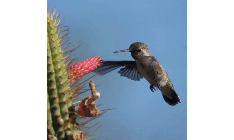 Devoted birders in Avifauna Project spotted 135 bird species in 2012