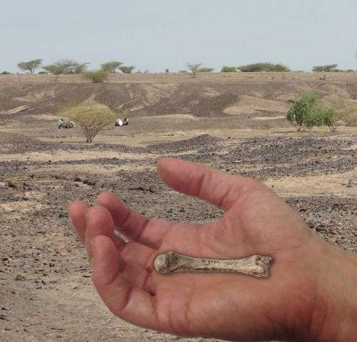 Discovery of 1.4 million-year-old fossil human hand bone closes human evolution gap
