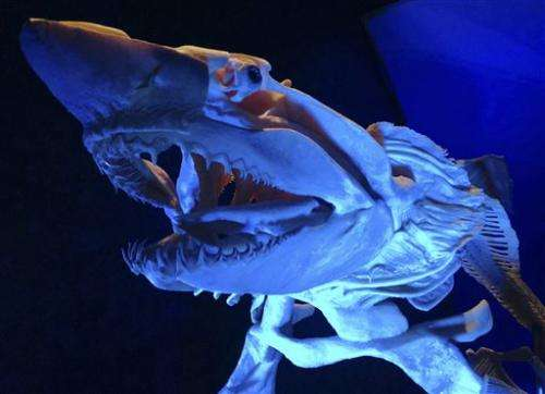 Georgia Aquarium exhibits preserved sea creatures
