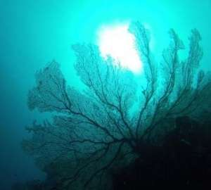 Global warming could corrode shallow reefs sooner than forecast